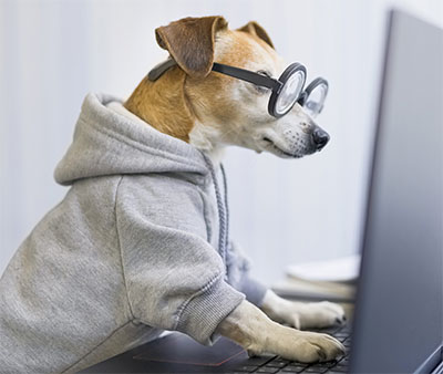 Dog Wearing Hoodie and Glasses